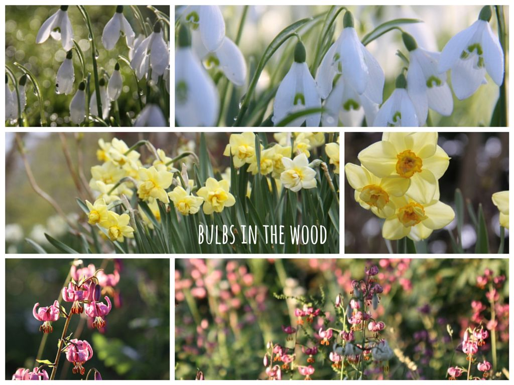 Woodland-Bulbs