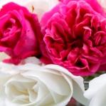 English Roses Thumbnail