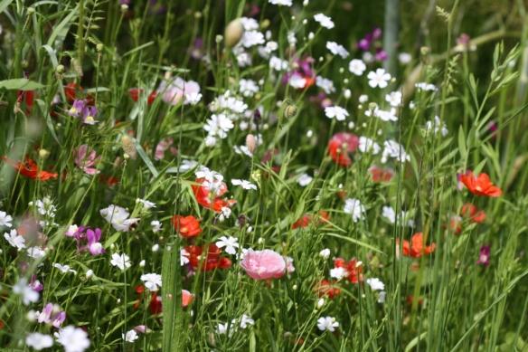 Wildflower Meadow 03