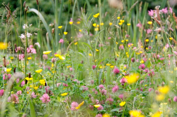 Wildflower Meadow 04