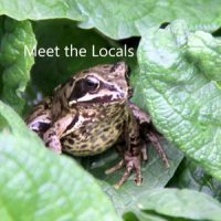 Meet-the-locals