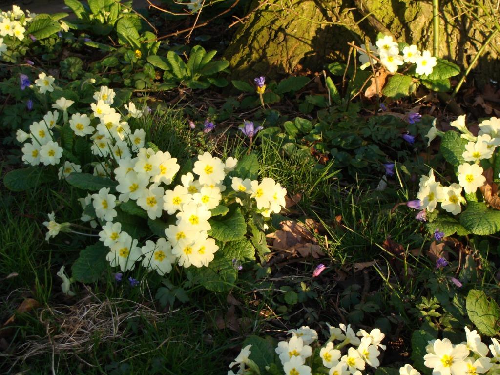 Spring Garden 02