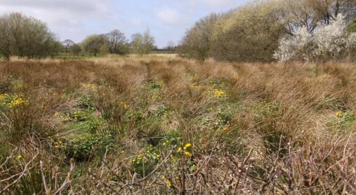 Marshy Field 01
