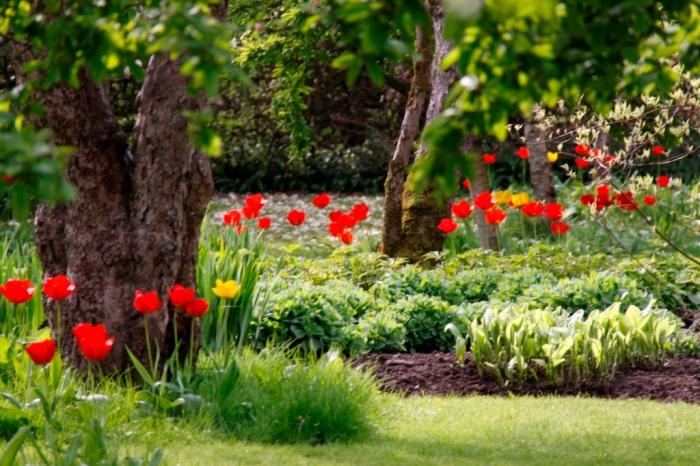 Tulips under trees