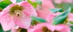 Gresgarth Review at Garden Visitor