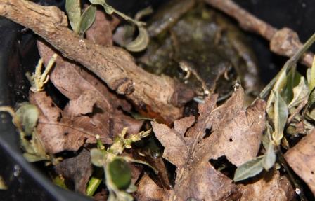 Leaves & Frog