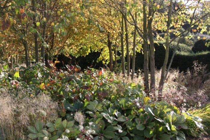 katsura-grove-Scampston