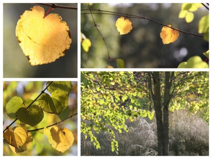 katsura-leaves-collage