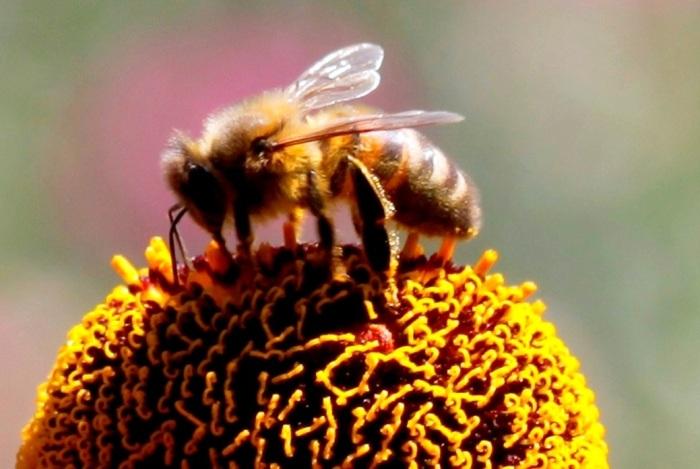 Big-Bee
