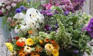 June-Flowers-Header