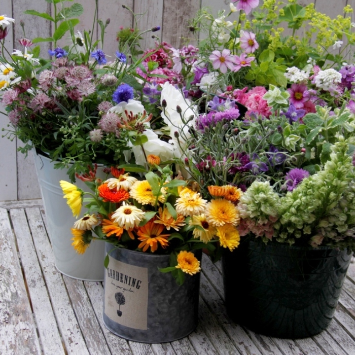 Country Garden Flowers | Country Garden UK