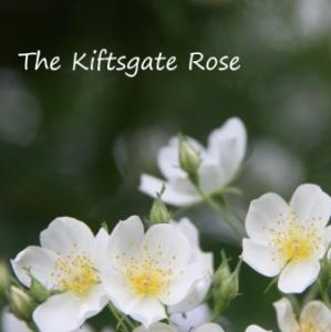 Kiftsgate-Thumbnail