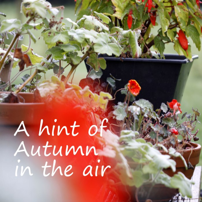 Hint-of-Autumn-Pots