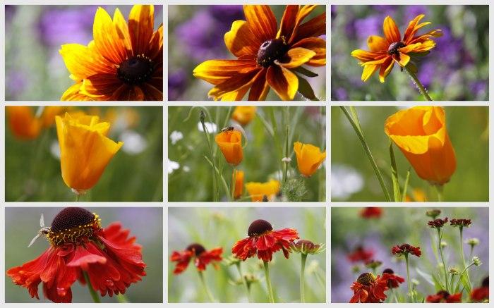 Orange-Collage-Opt