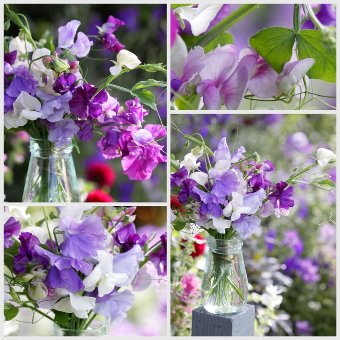 Sweet-Peas-Collage-opt