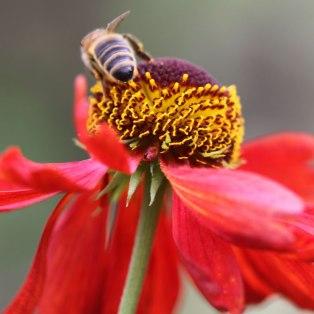 Bee-03