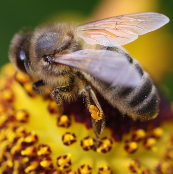Bee04