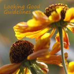 looking-good-guidelines - Copy