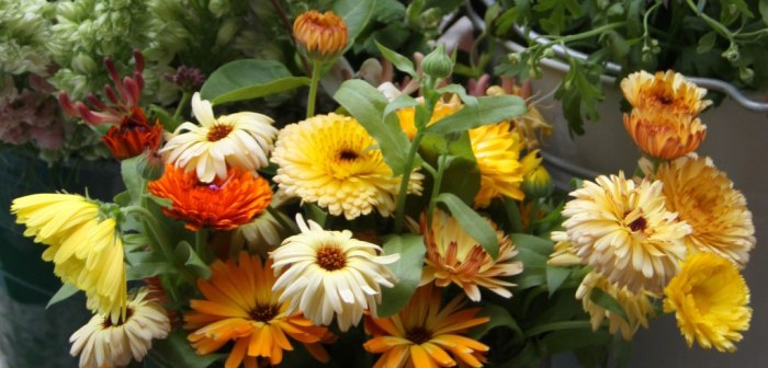 Mixed-Calendula
