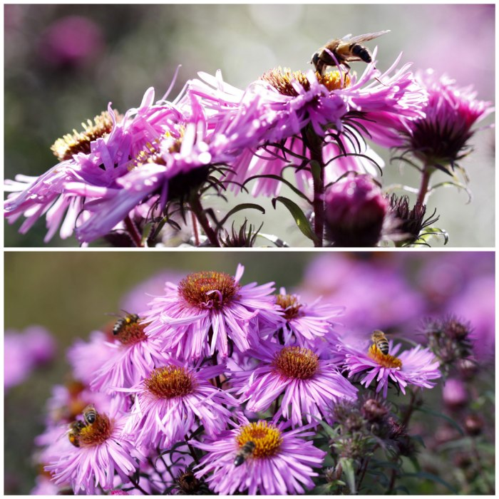 Bees-Aster