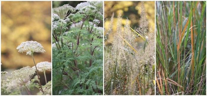 Calamagrostis&Angelica