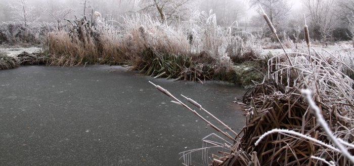 Frozen-Pond