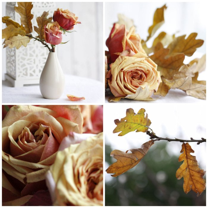 Cherry-Brandy-Roses-Collage