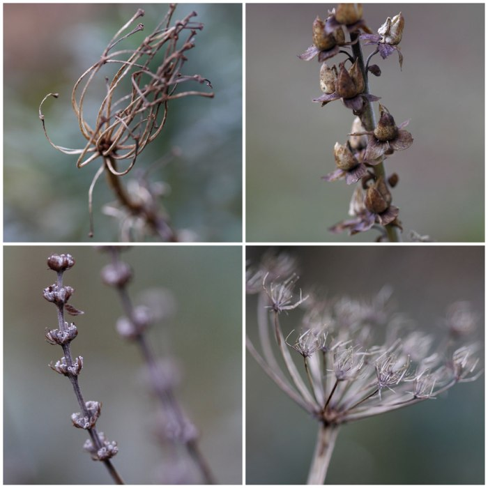 December-Seedheads