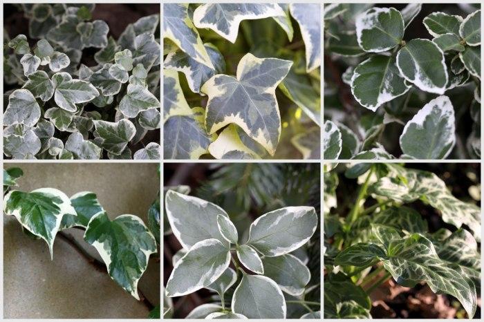 Variegated-Leaves-Collage