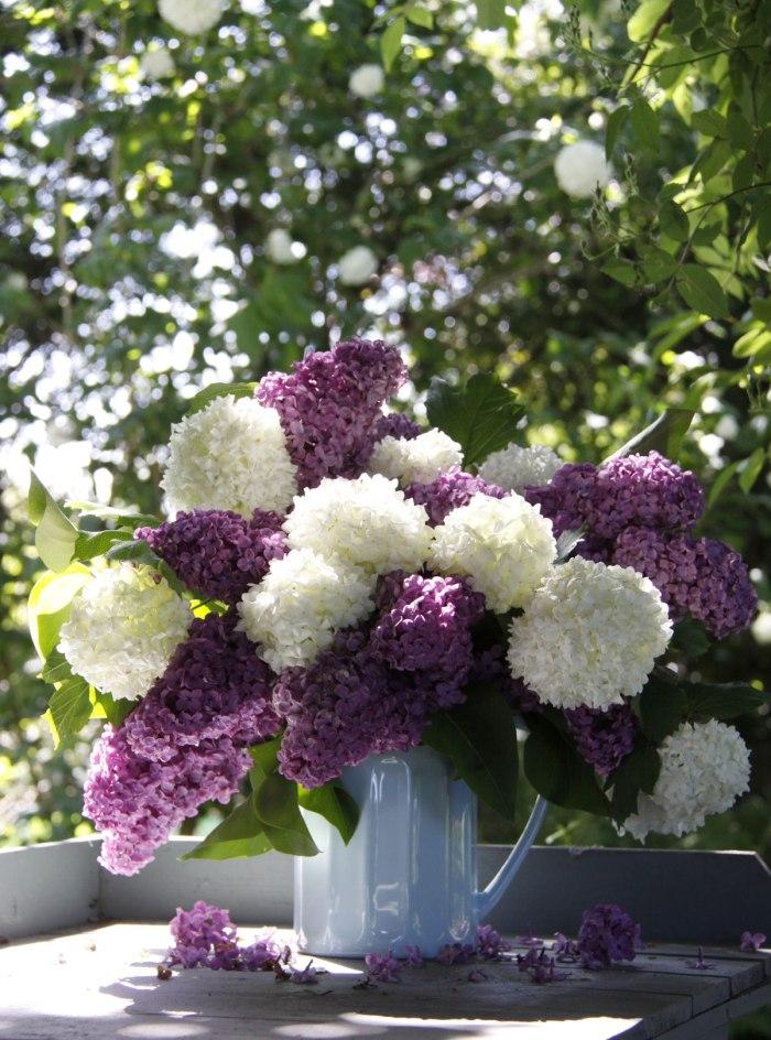 Lilac&Viburnum