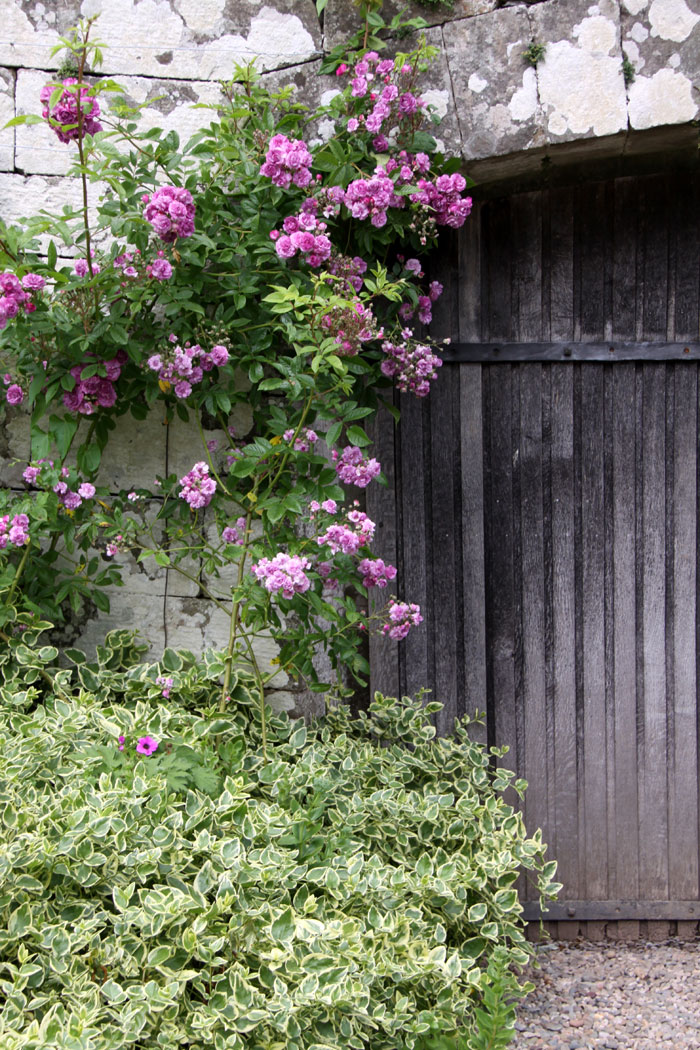I\u0027ll leave you with one last look at that gorgeous garden door and a beautiful rose. I\u0027m joining in with Norms Thursday Doors today. & The Garden at Dalemain | Country Garden UK